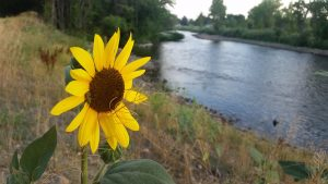 20160727_063807_ft_collins