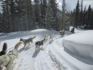 dog_sledding_25