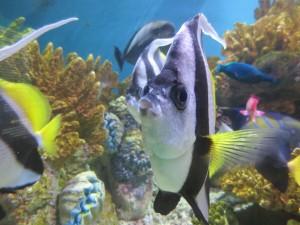 ne_aquarium_IMG_5339